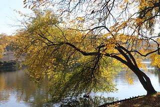 Łazienki Park, Warsaw, Poland | by LeszekZadlo