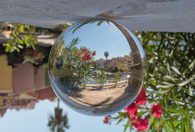 flowers in a glassball
