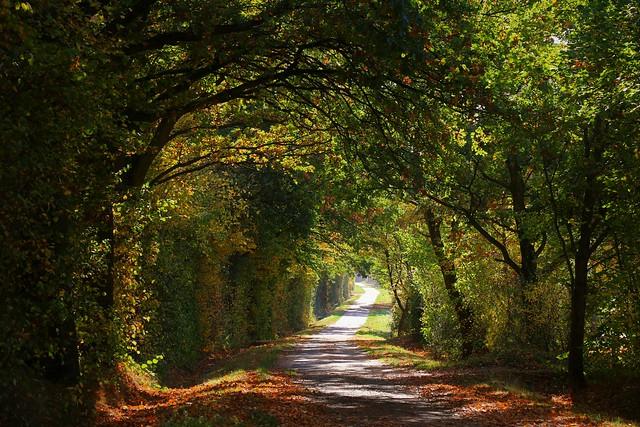 Autumn tunnel