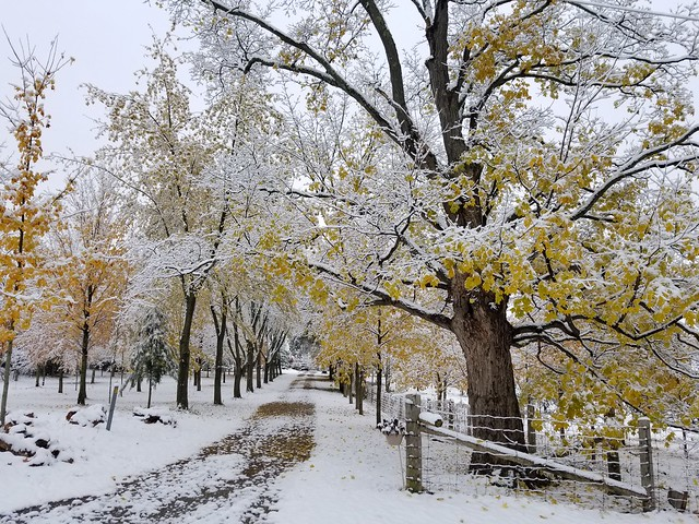 Early Snow, Late Fall