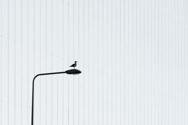 Lamp post, bird and white wall