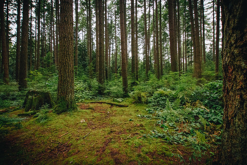 Pacific Spirit Regional Park | by Viv Lynch