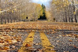2018/365/280 Quiet Road   by cogdogblog