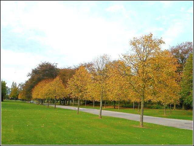 Tree Line-Up ...