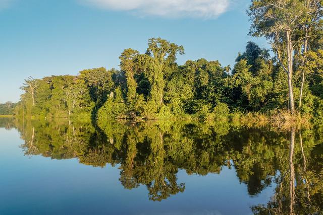 ** Mon beau miroir ** Rain forest ..Manu National park