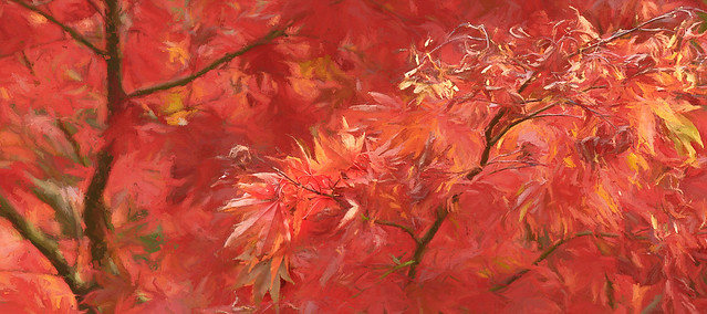 Glorious Acer