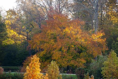 brooksidegardens montgomerycounty autumn fall