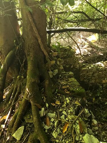 Morlansko ubideak ezagutzeko ibilaldia