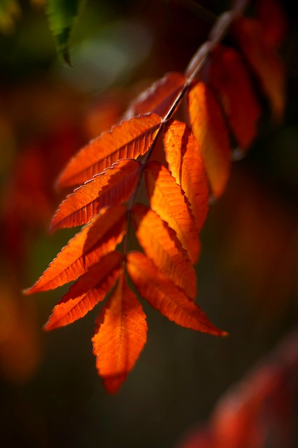 Playing with autumn colours 3