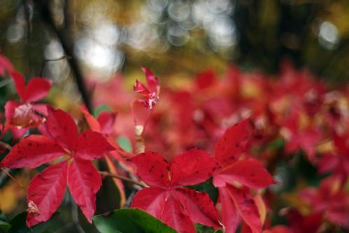 Autumn Bokeh | by spitzerua