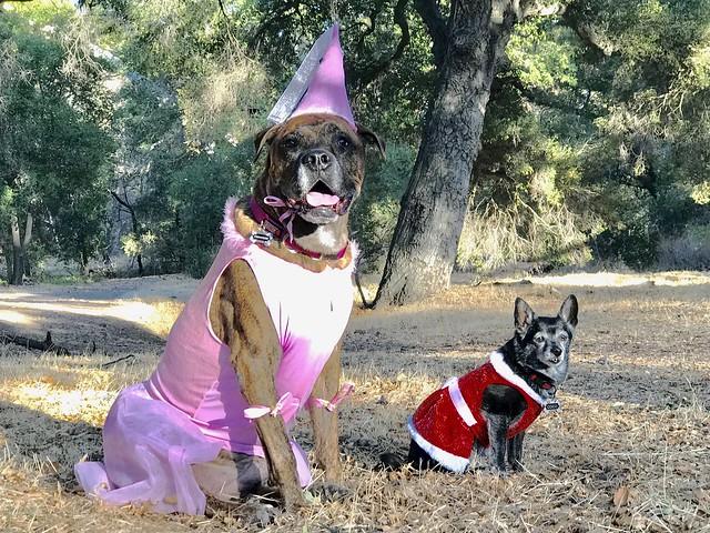 Princess and Coco celebrate