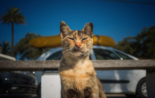 Cool Cat... | by hobbit68