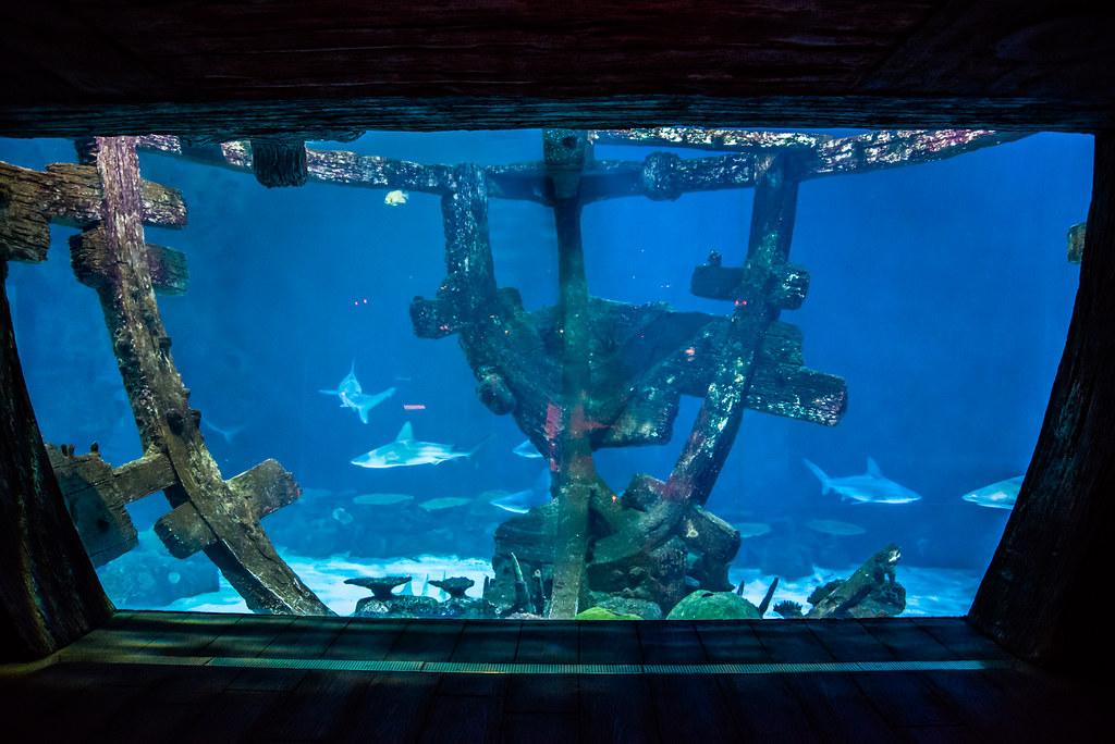 Shipwreck Tank - Shark Reef Aquarium at Mandalay Bay - Las ...