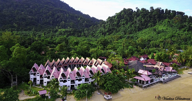 In the heart of the jungle. Tioman island, Malaysia