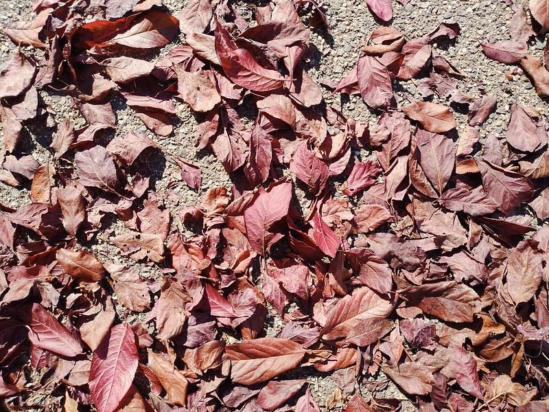 Fallen Leaves #11