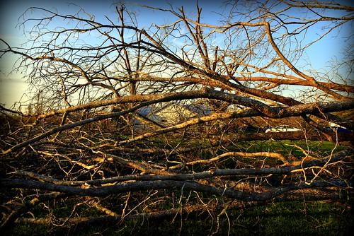 fallenpecantrees hurricanemichael floridapanhandle altha fl damage devastation