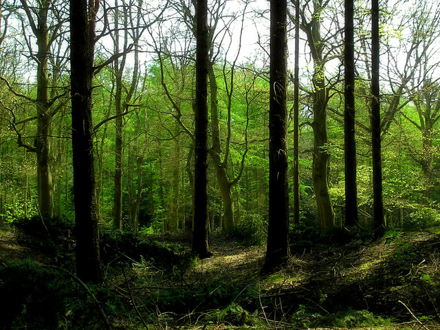 Inside the forrest of the Lage Vuursche