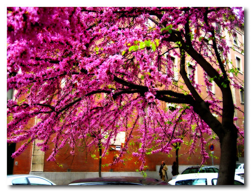 spring in the city (III)