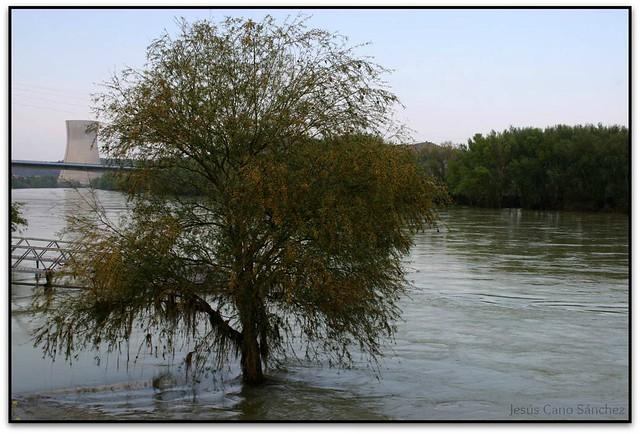 Lo riu, Ascó (la Ribera d'Ebre)