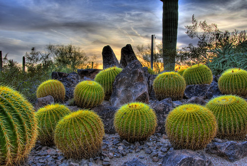 travel sunset arizona cactus plants bulb clouds cacti botanical rocks desert barrel scottsdale saguaro hdr succulents supershot abigfave cactisucculentsbulbplants