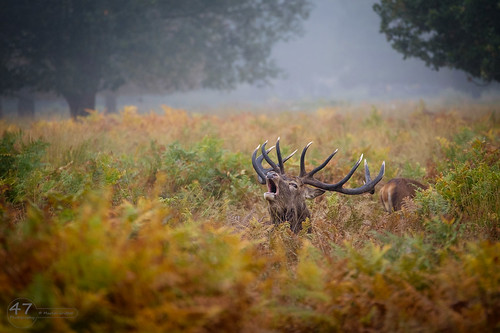 Richmond Park | by 4orty7even