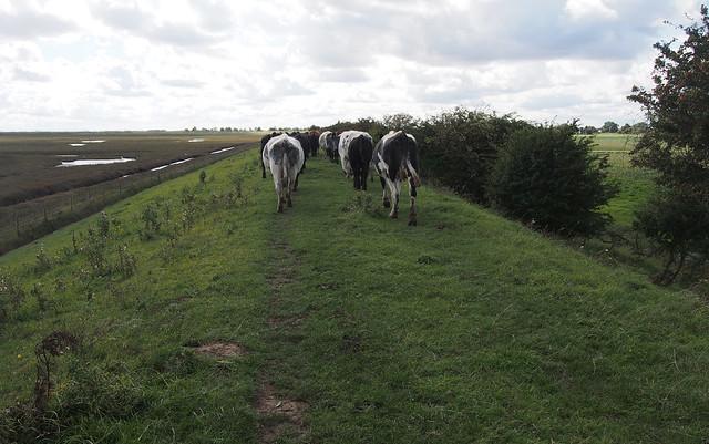 Walking companions near Freiston