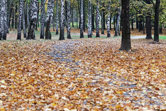 A path covered with leafs in the Lotników Park