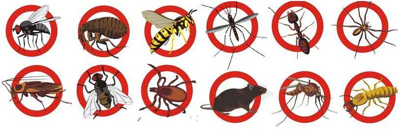 Pest Control Homebush, NSW 2140