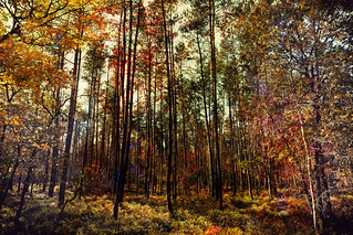 Autumn Expressionism | by Alfred Grupstra