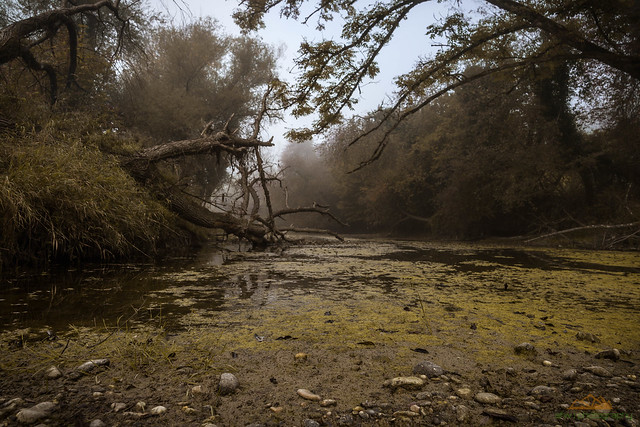 Dunst und Nebel am Rhein bei Ettikon