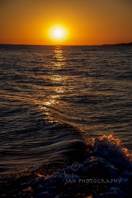 Light Seasnake