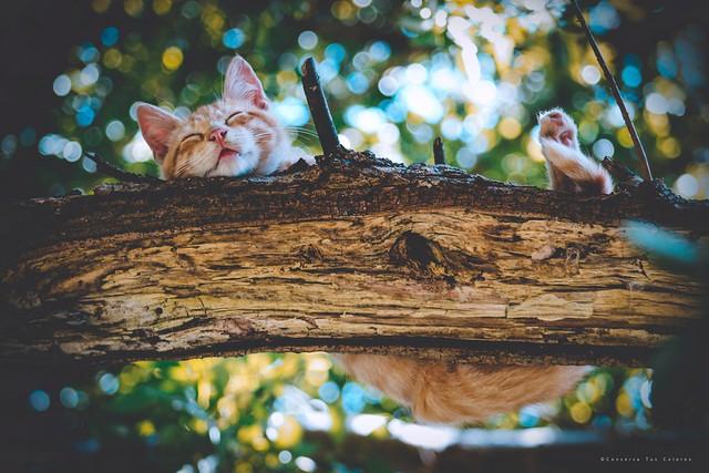 Sus mejores sueños, fueron arriba de un árbol