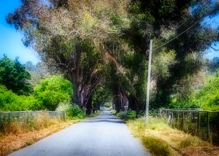 Tree Tunnel on Stage Road 2   by CDay DaytimeStudios w /1 Million views
