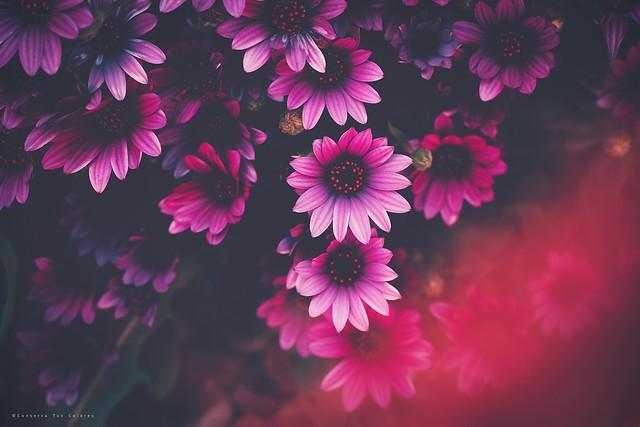Todo era flores