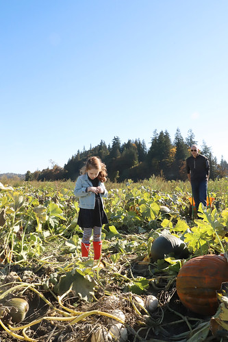 20181013 pumpkin patch4 | by schnell foto