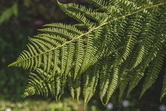 I fernly believe in ferns.
