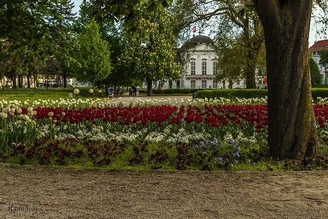 Presidential garden - Bratislava