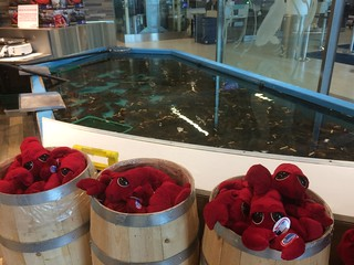 Live and Plush Lobsters at Halifax Stanfield International Airport | by brownpau
