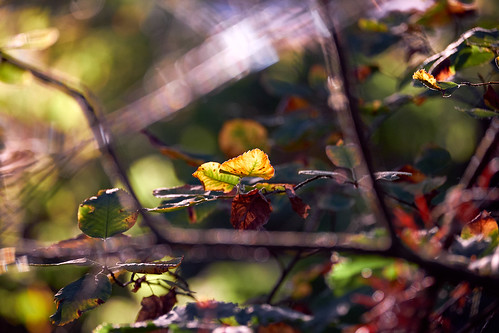 Autumn Beginnings | by Whitney Goodey