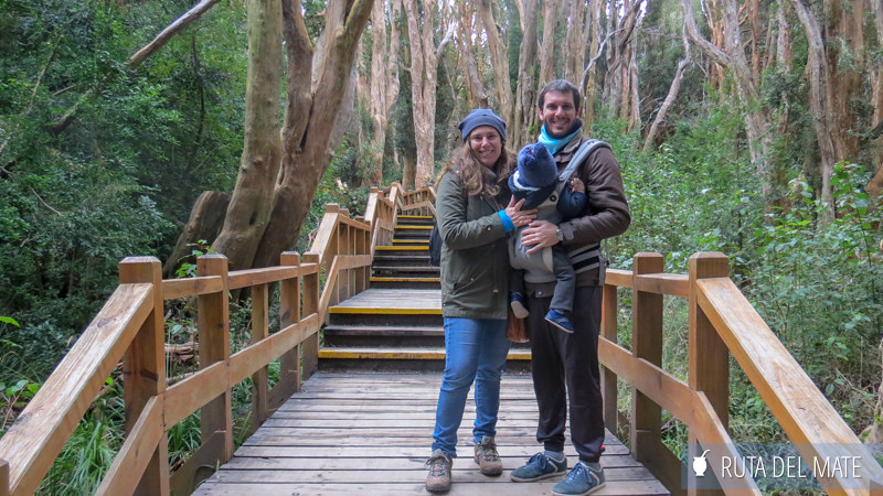 Bosque de Arrayanes en Villa La Angostura, Qué ver en Patagonia Argentina