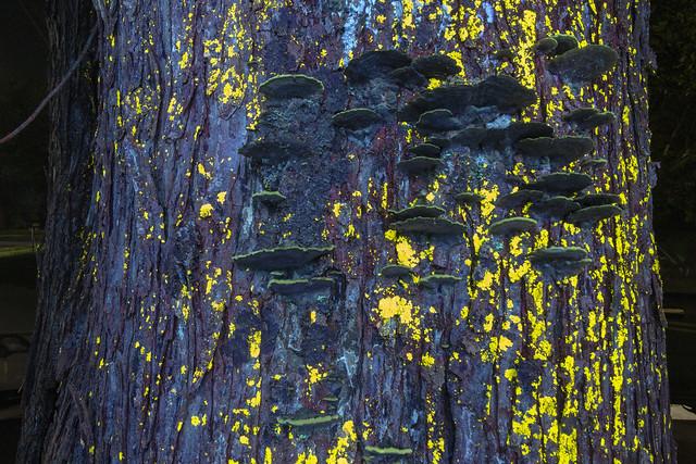 Lichen and fungii, longwave light 1