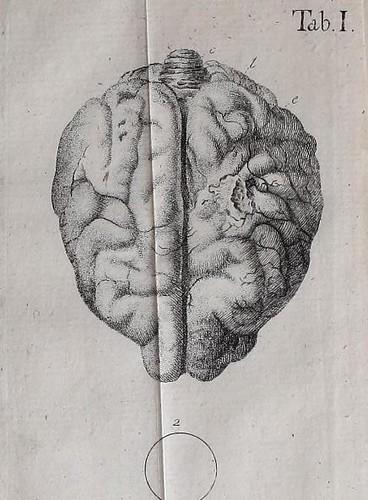 Gehirn Regeneration