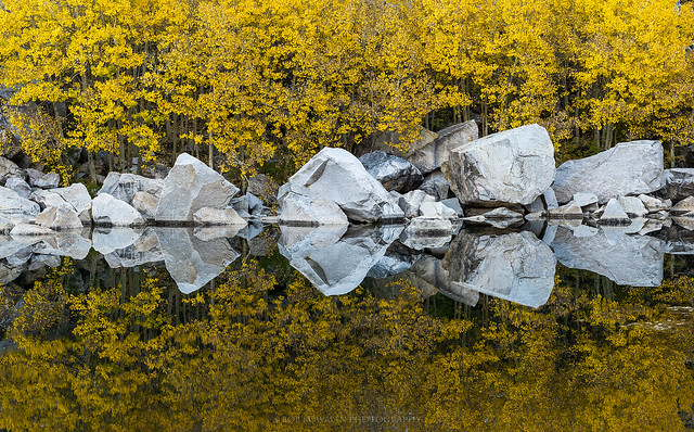 Goldie Rocks