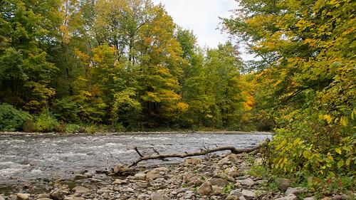 québec canada ca arbremort rivièreautomne autumnparcchauveau 7518 arbre mort et rivière saintcharles dead tree river