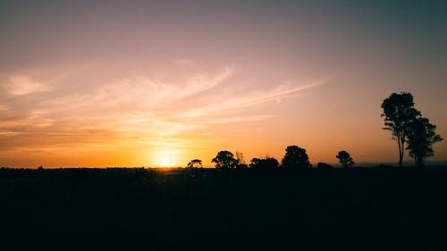 appleiphone7 australia clouds landscape newsouthwales schofields sky sunset sydney tree