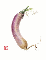 Navet - Brassica rapa-  Pascal Brault