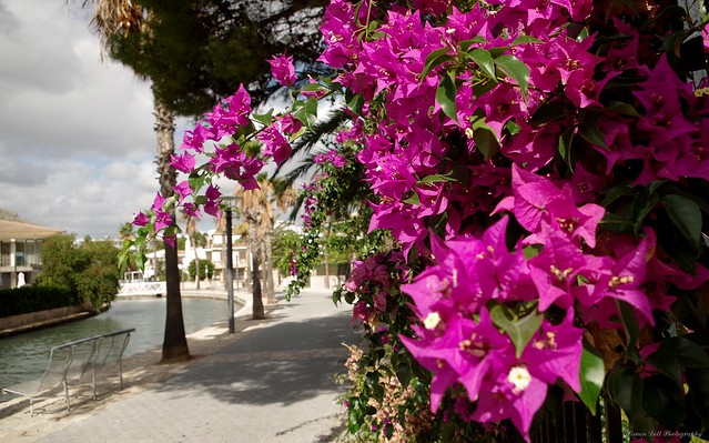 alcudia majorca town and views 2018