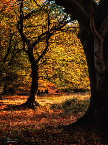 Autumn in the Woods | by steved_np3