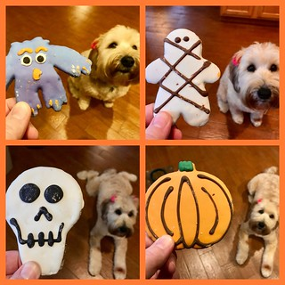 Leia had some Halloween cookies