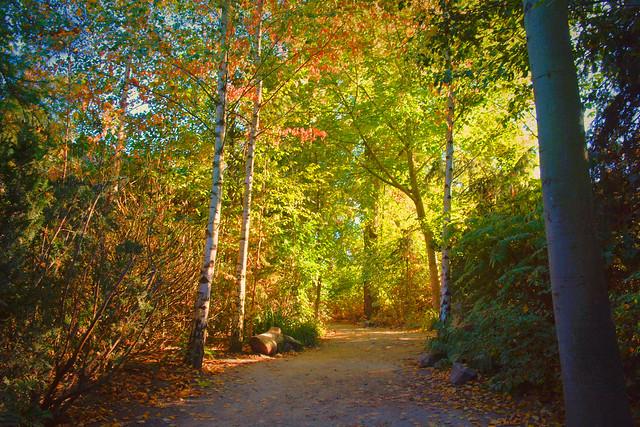 Autumn | Rosental Leipzig